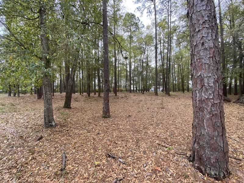 FSW Acquires 2.8 Acres of New Green Space Featured Photo
