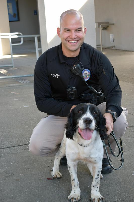 Jack the detection dog