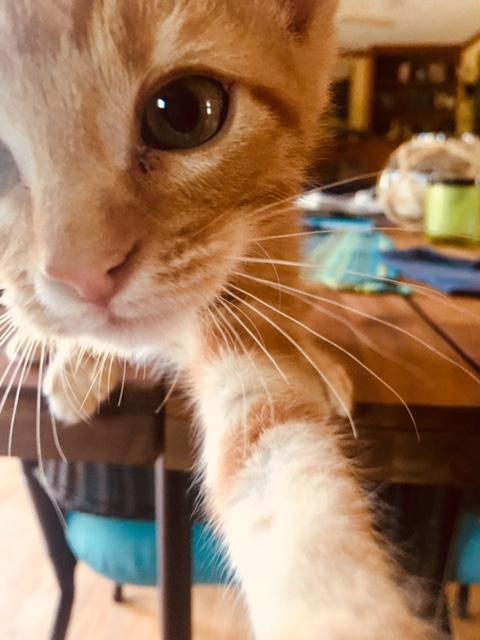 Ollie loves to take selfies!