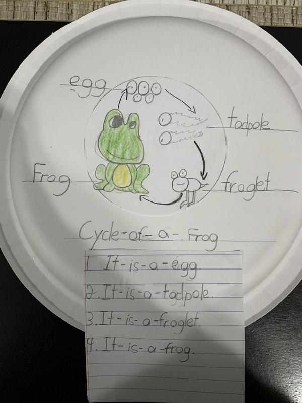 Frog cycle drawing on paper plate