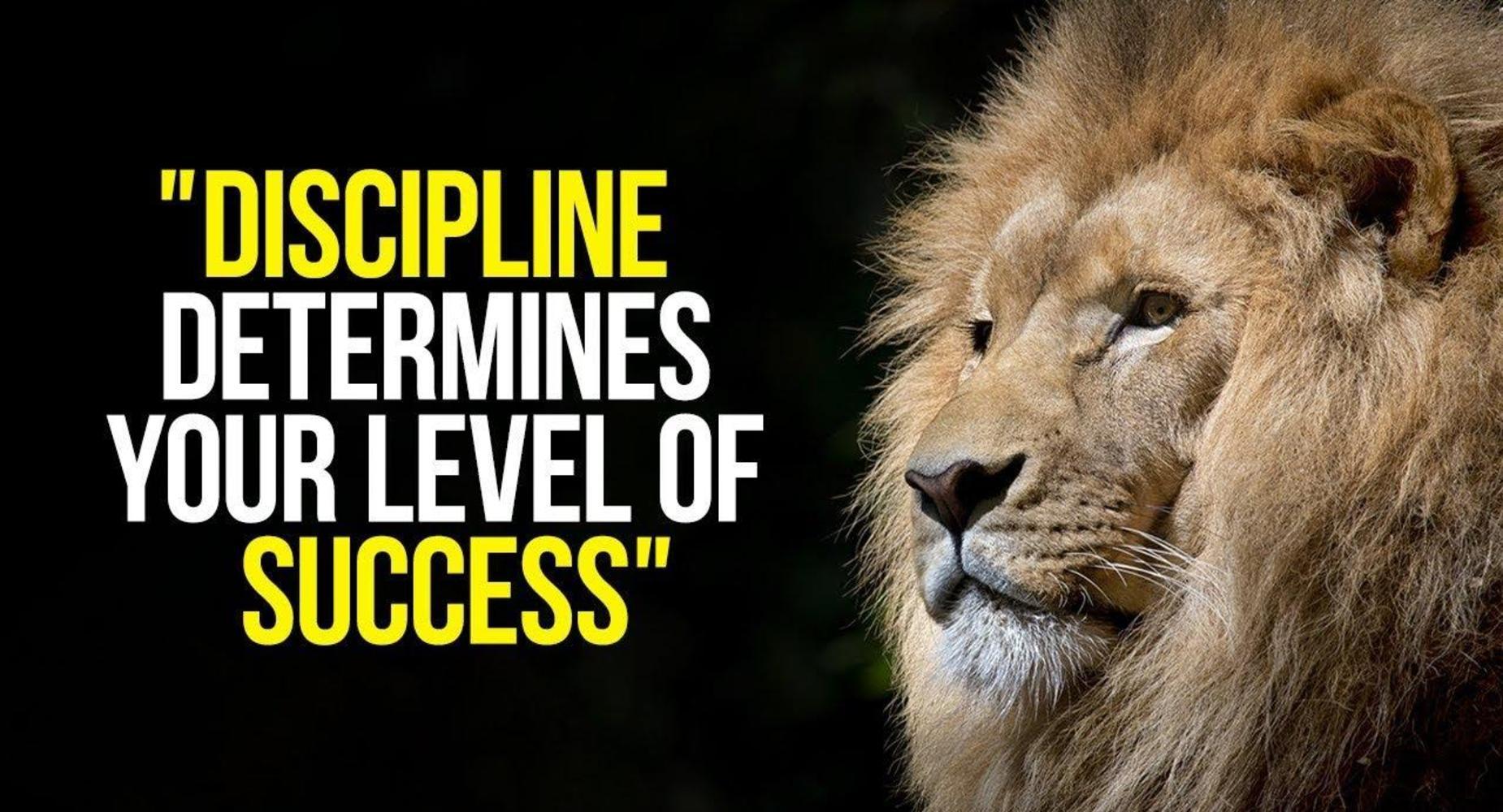 Discipline Lion