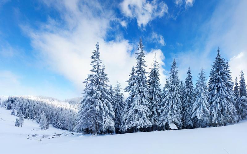 TVLA December Newsletter Featured Photo