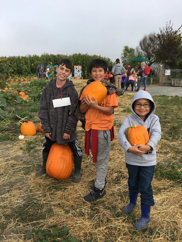 Three boys with pumpkins