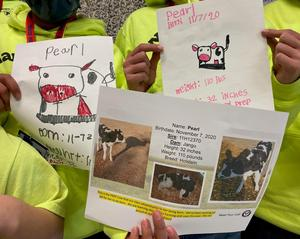 A close up of the hand-drawn birth announcements for dairy calf Pearl.