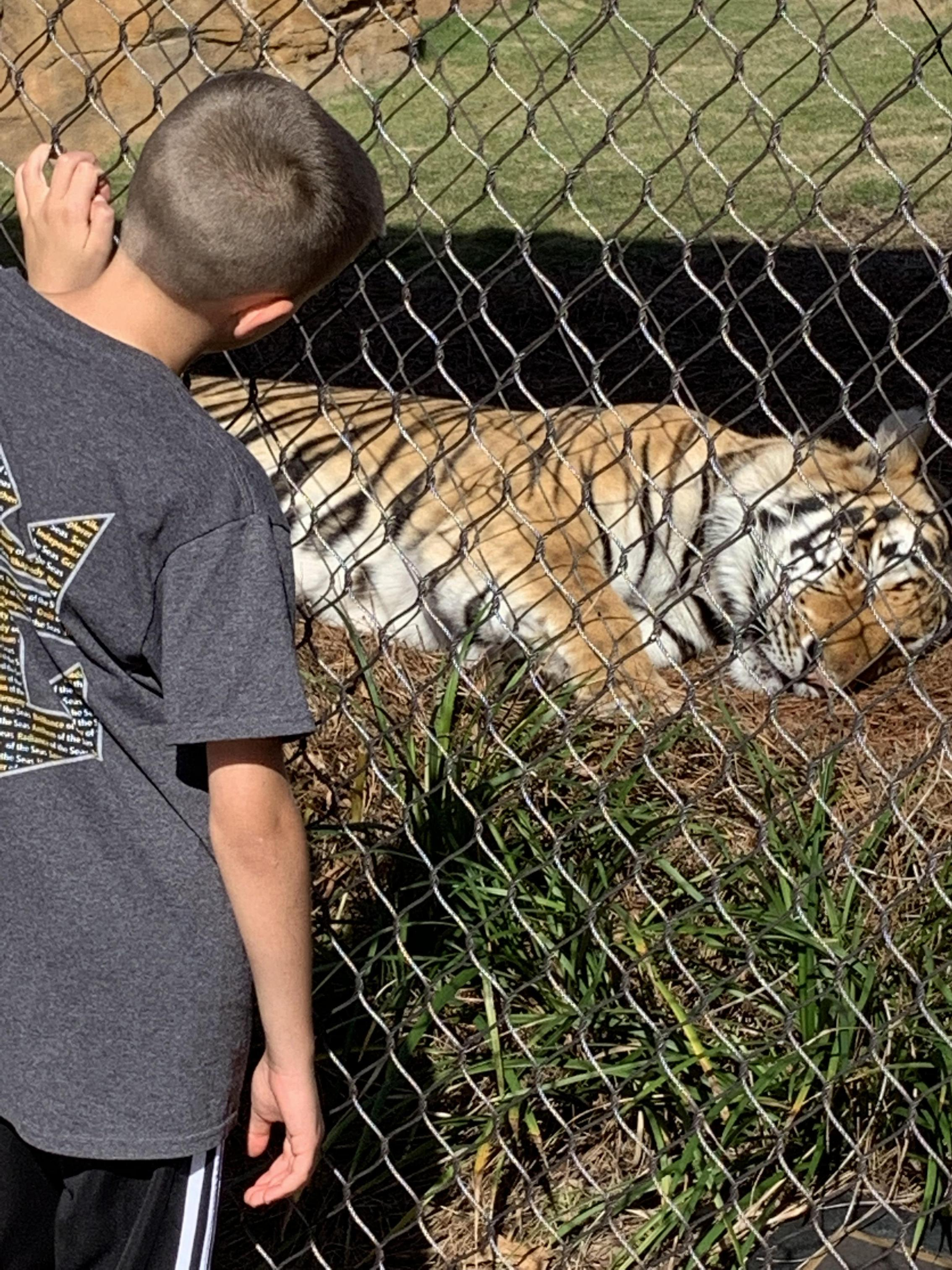 We love visiting LSU's famous Mike the Tiger every chance we get!