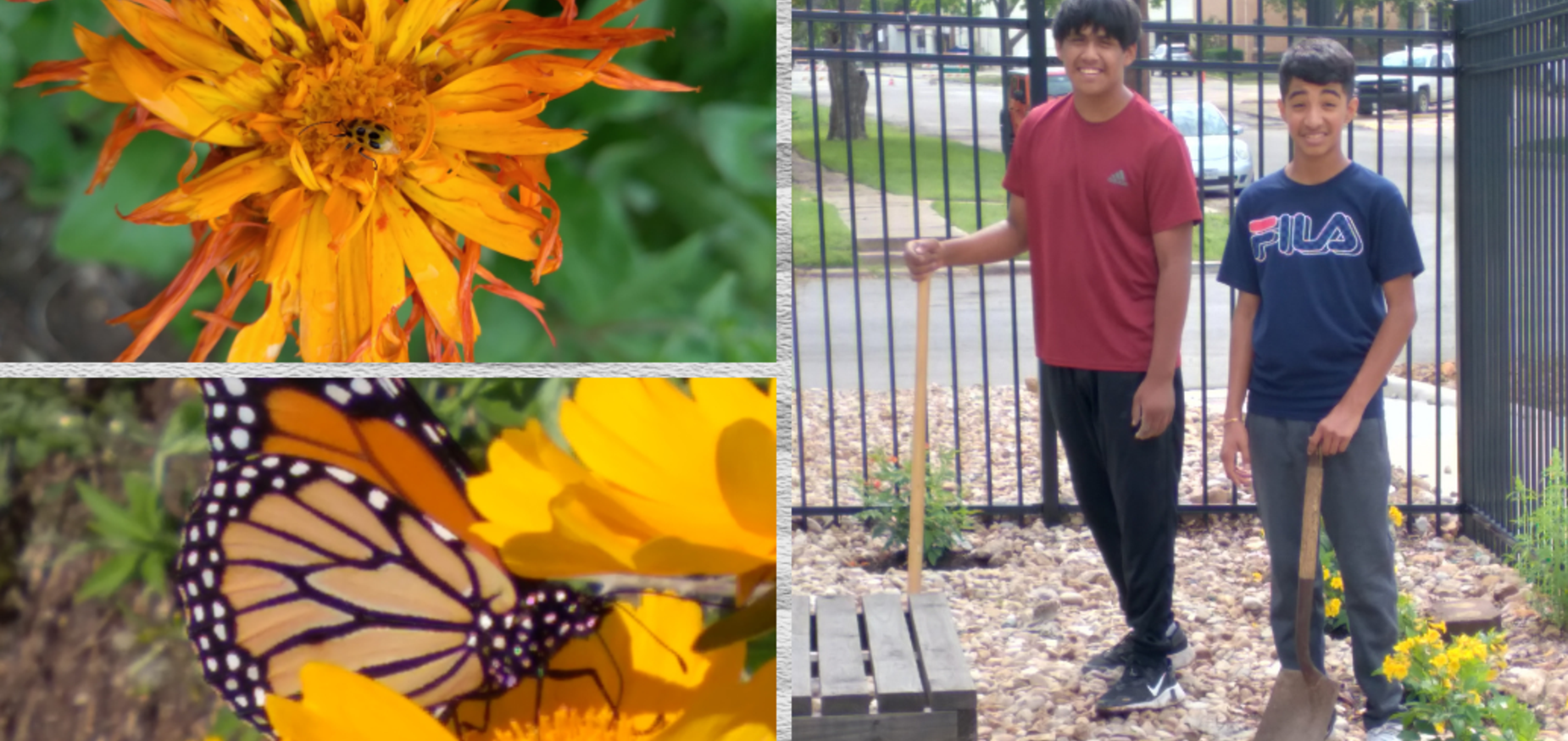 Students have put in hard work to make the LECHS gardens a beautiful insect sanctuary.