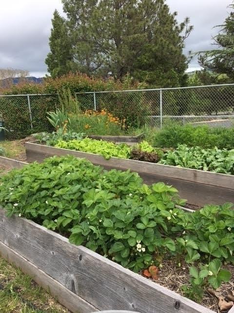 Calpella Elementary student garden area