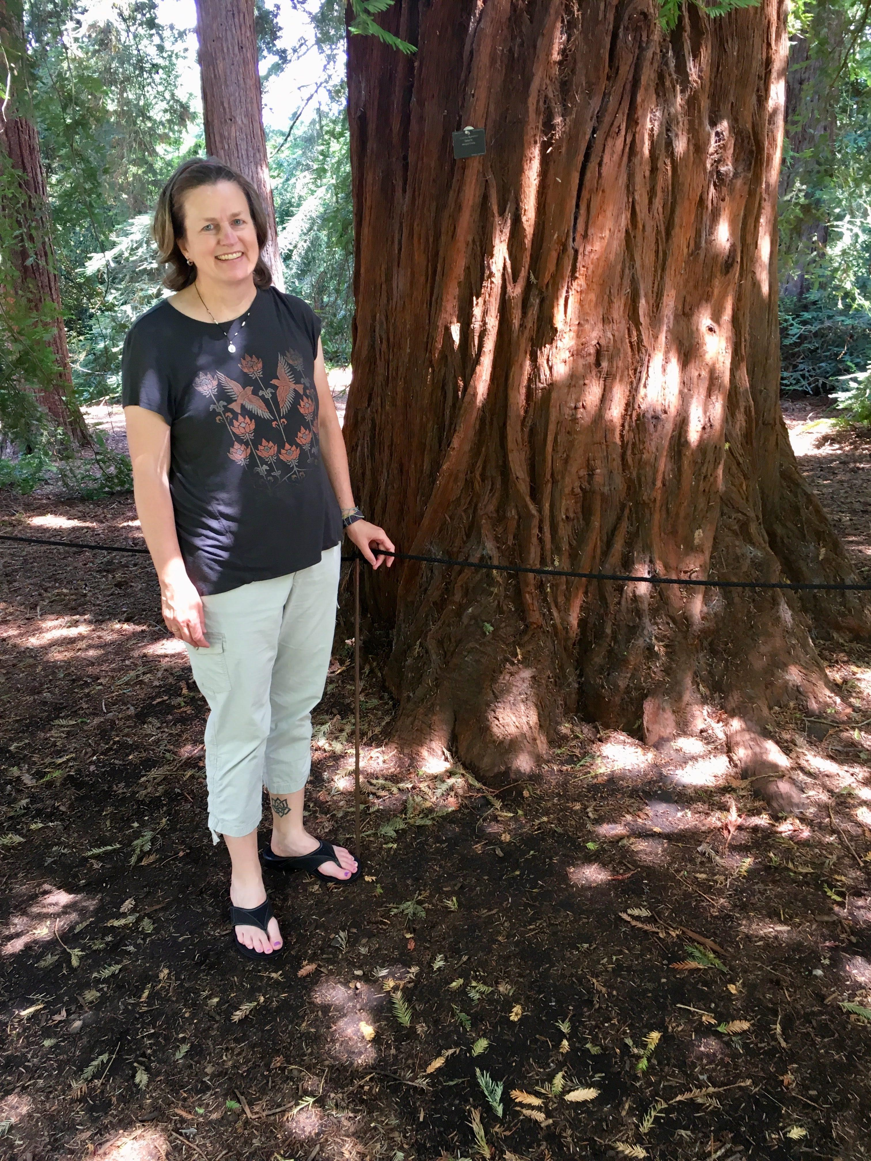 I found some giant redwoods at London's Kew Gardens!