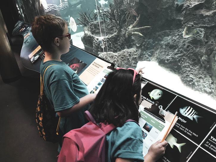 Campers at HWIS Language Immersion Camp visit an aquarium