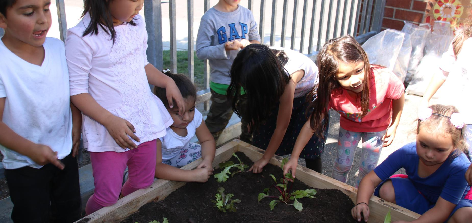 Kindergarteners planting plants for the garden box
