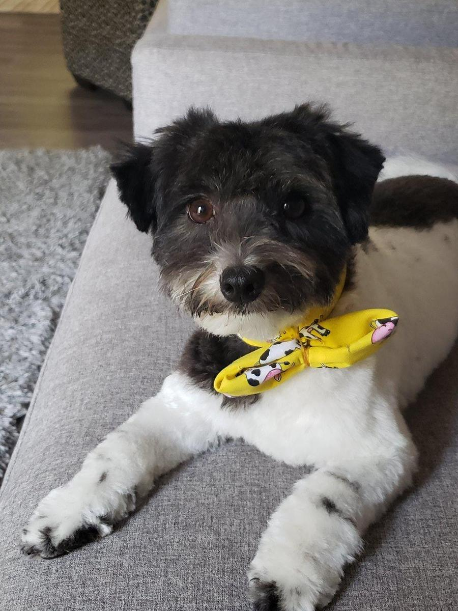 Baxter, my little rescue dog