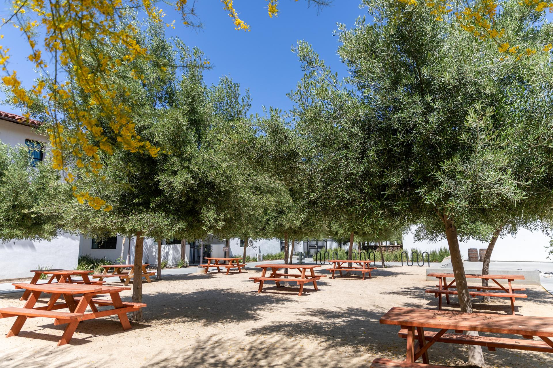 Olive grove on campus