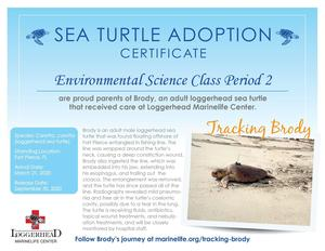 "11th and 12th graders in Jennifer Sirman's environmental science class ""adopted"" a sea turtle named Brady after making a virtual field trip on Nov. 24 to the Loggerhead Marinelife Center in Juno Beach, Florida."