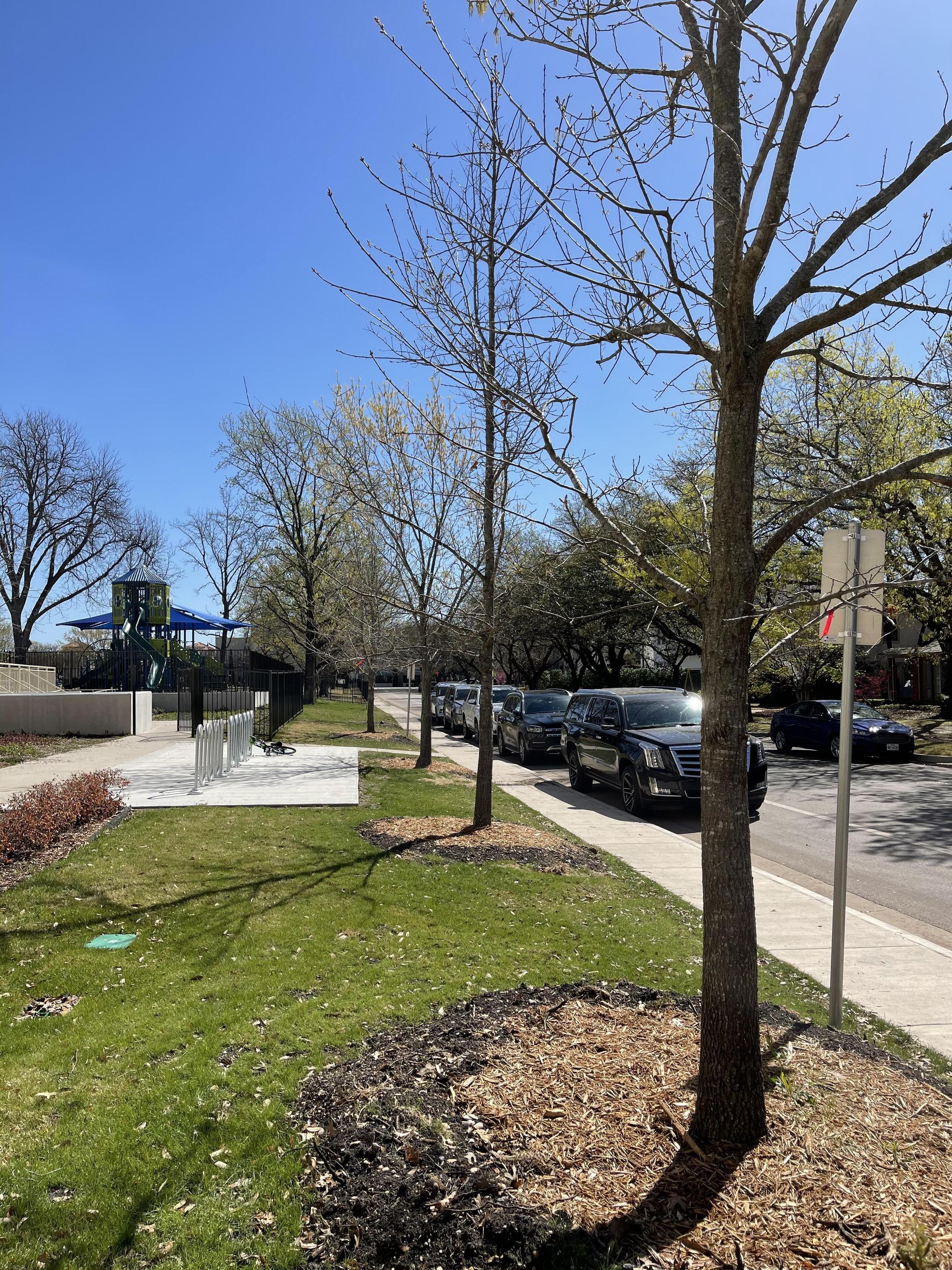 Bradfield Tree Planting
