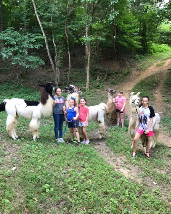 Kids attending the llama camp is hiking with the llamas in the woods on the farm.