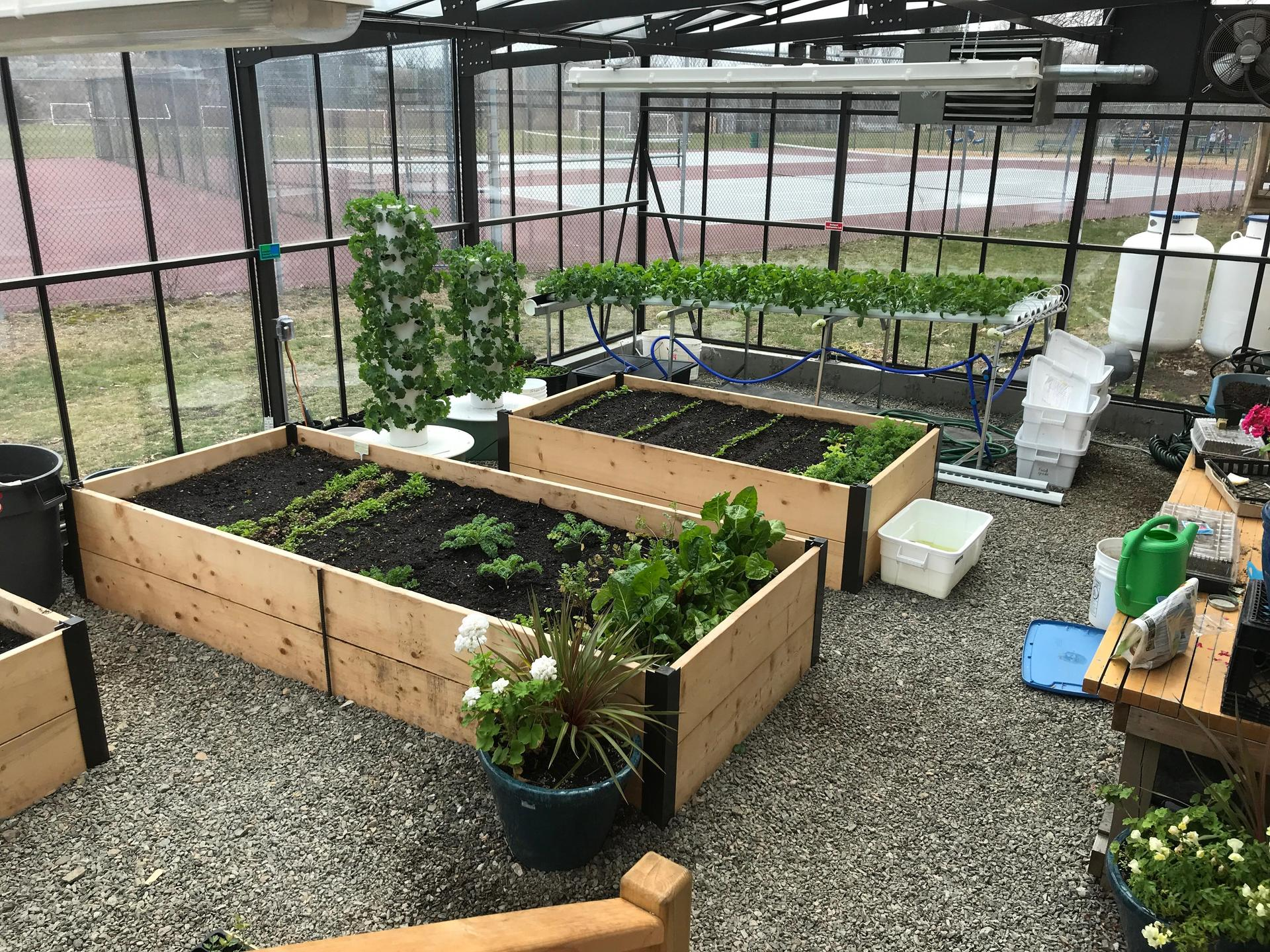 Picture of the inside of the greenhouse