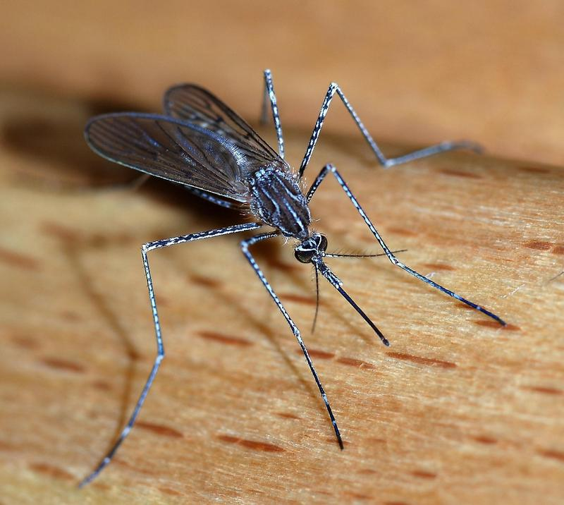 Important: Mosquito Spraying in Foxborough to Prevent EEE Featured Photo
