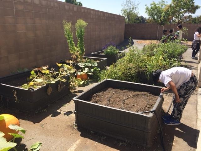 Ramblewood Garden - garden clean up