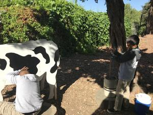 students (pretending) to milk a cow and churning butter