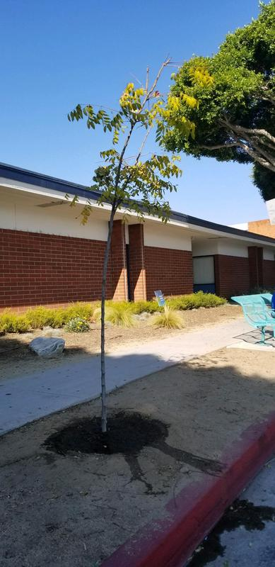 Help Protect the New Trees in Front of School Featured Photo