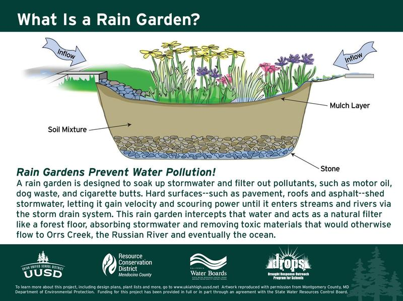 Ukiah Unified School District's Rain Gardens Protect Creeks and Engage Students Thumbnail Image
