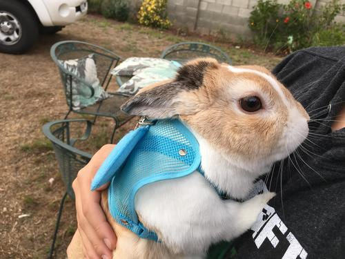 Buttercup is one of my daughters' bunnies!