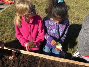 Students plant seeds