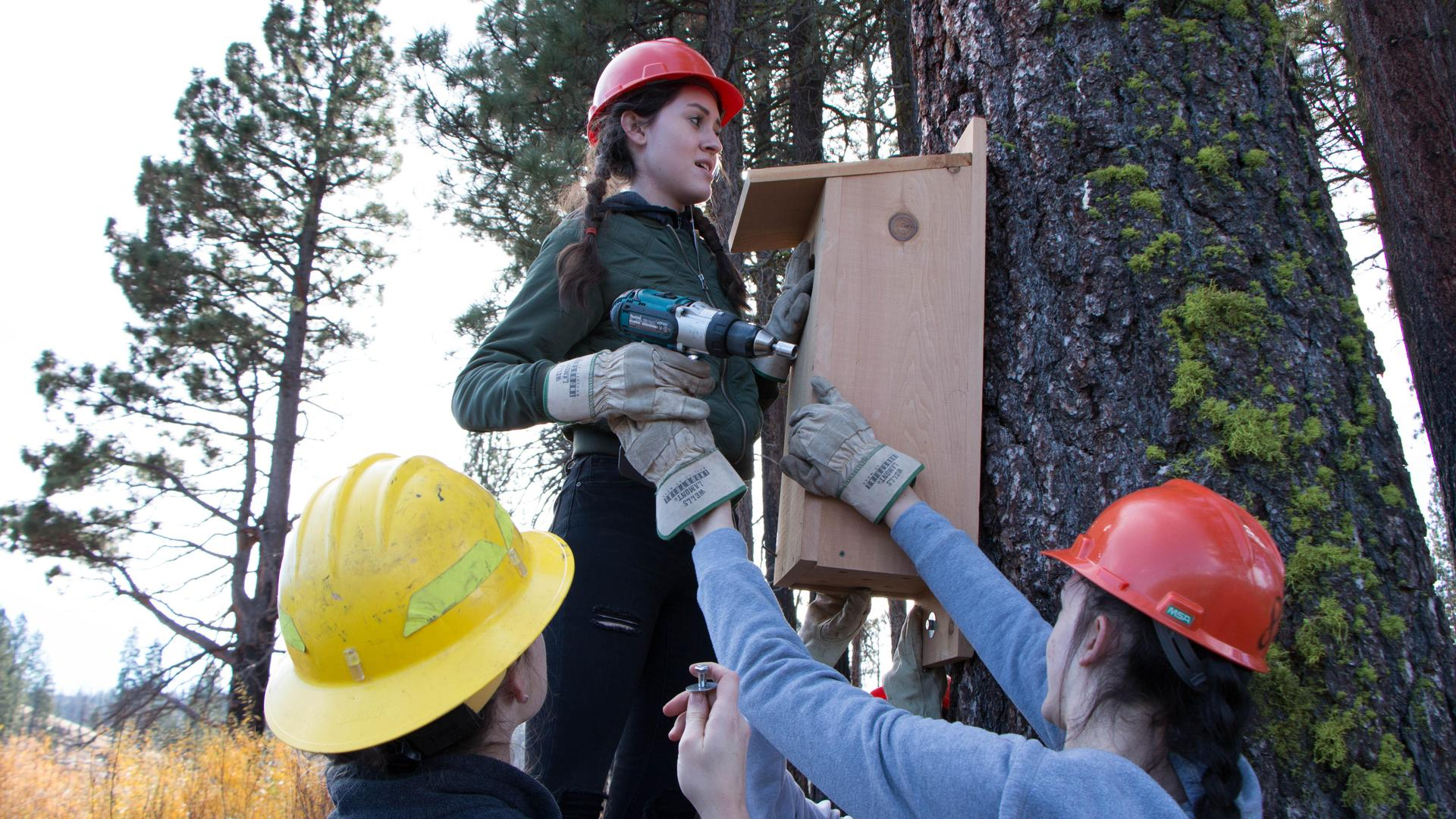 Putting up Wood Duct Nesting Boxes