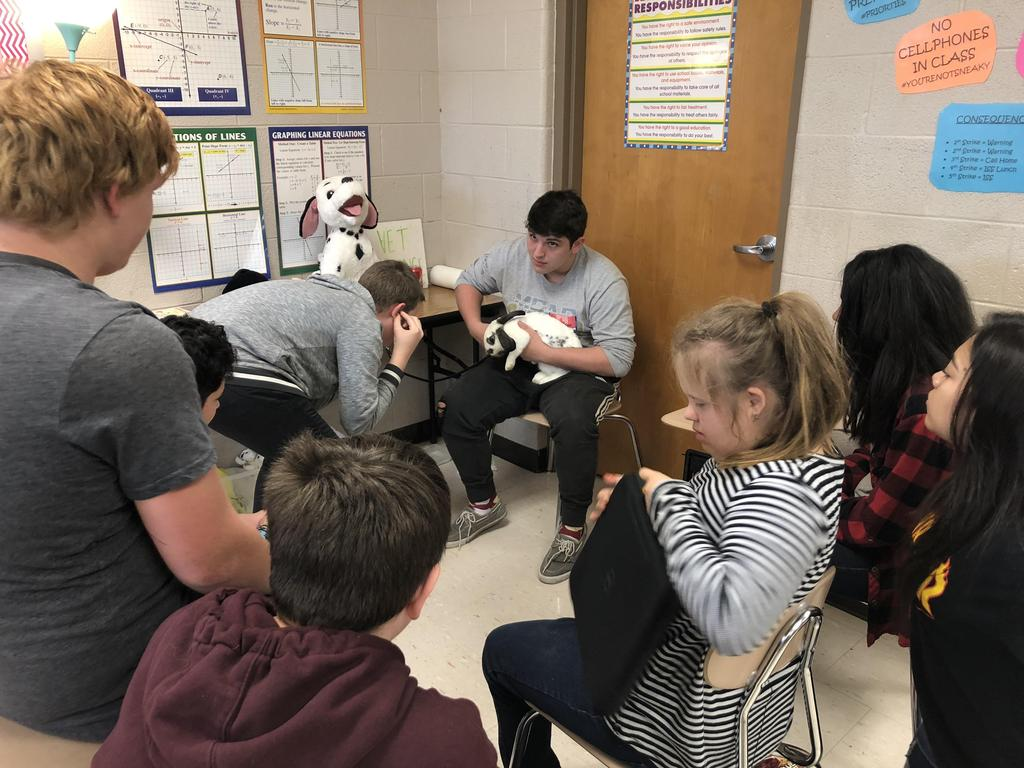 Middle school students listen to a bunny rabbit's heartbeat