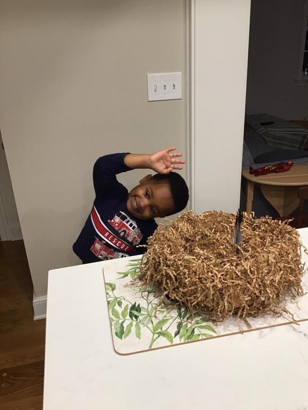 Sean's nest.jpg