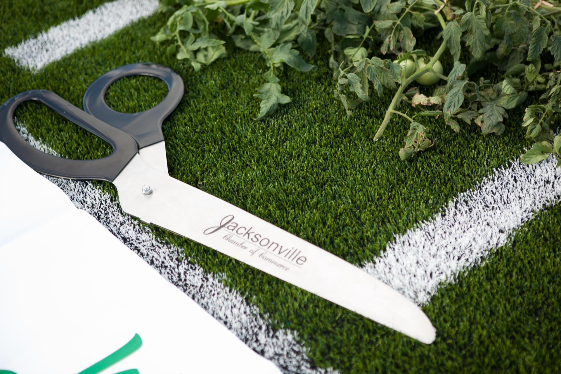big scissors to cut ribbon (tomato vine) with