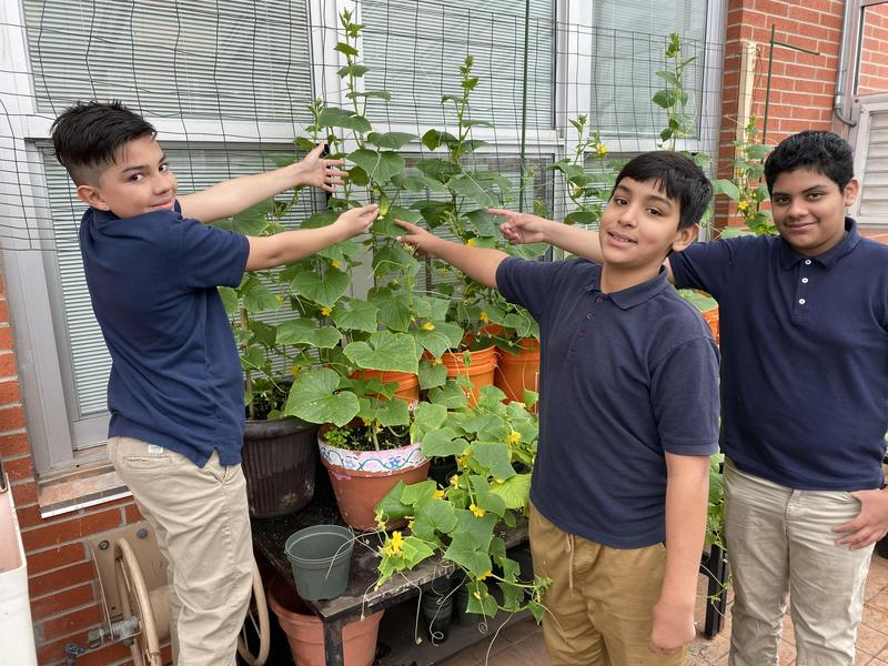 Students planting cucumbers.