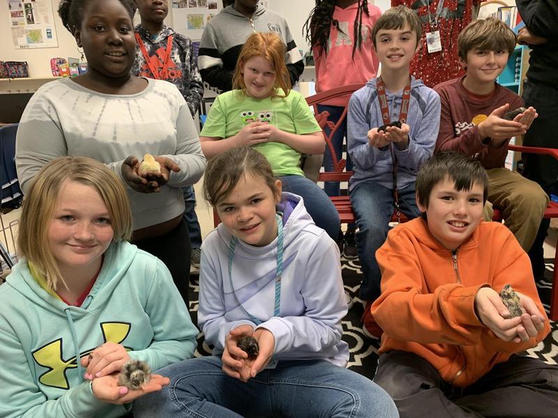 5th Grade Chicks Arrive Thumbnail Image