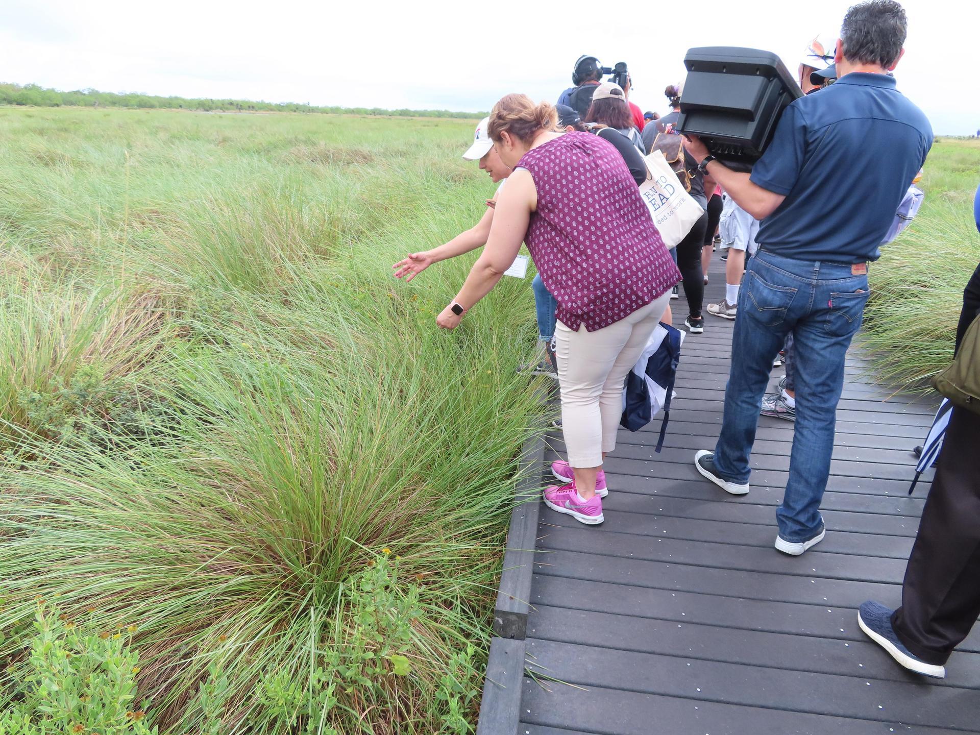 Teachers observing wild grass