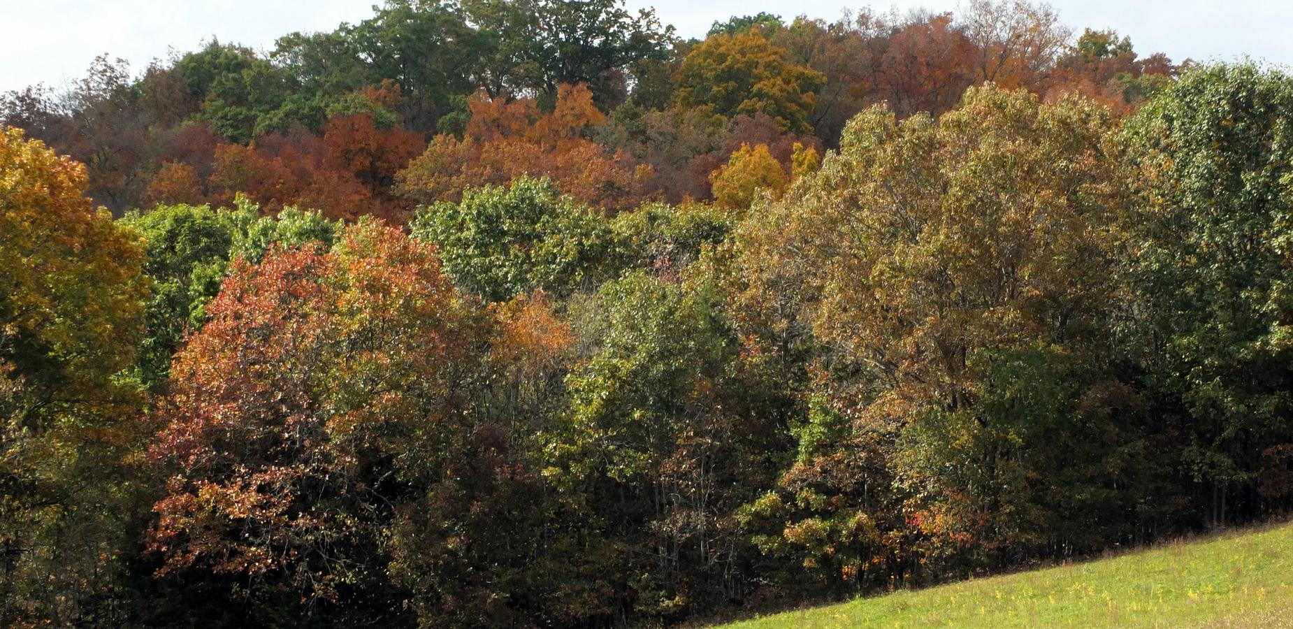 Fall Colors in Baileyton