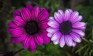 flowers-2234952_640.jpg
