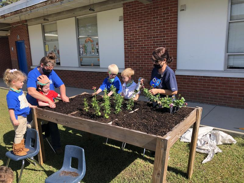 Pre-K students and their teachers plant lettuce in a raised table of soil.