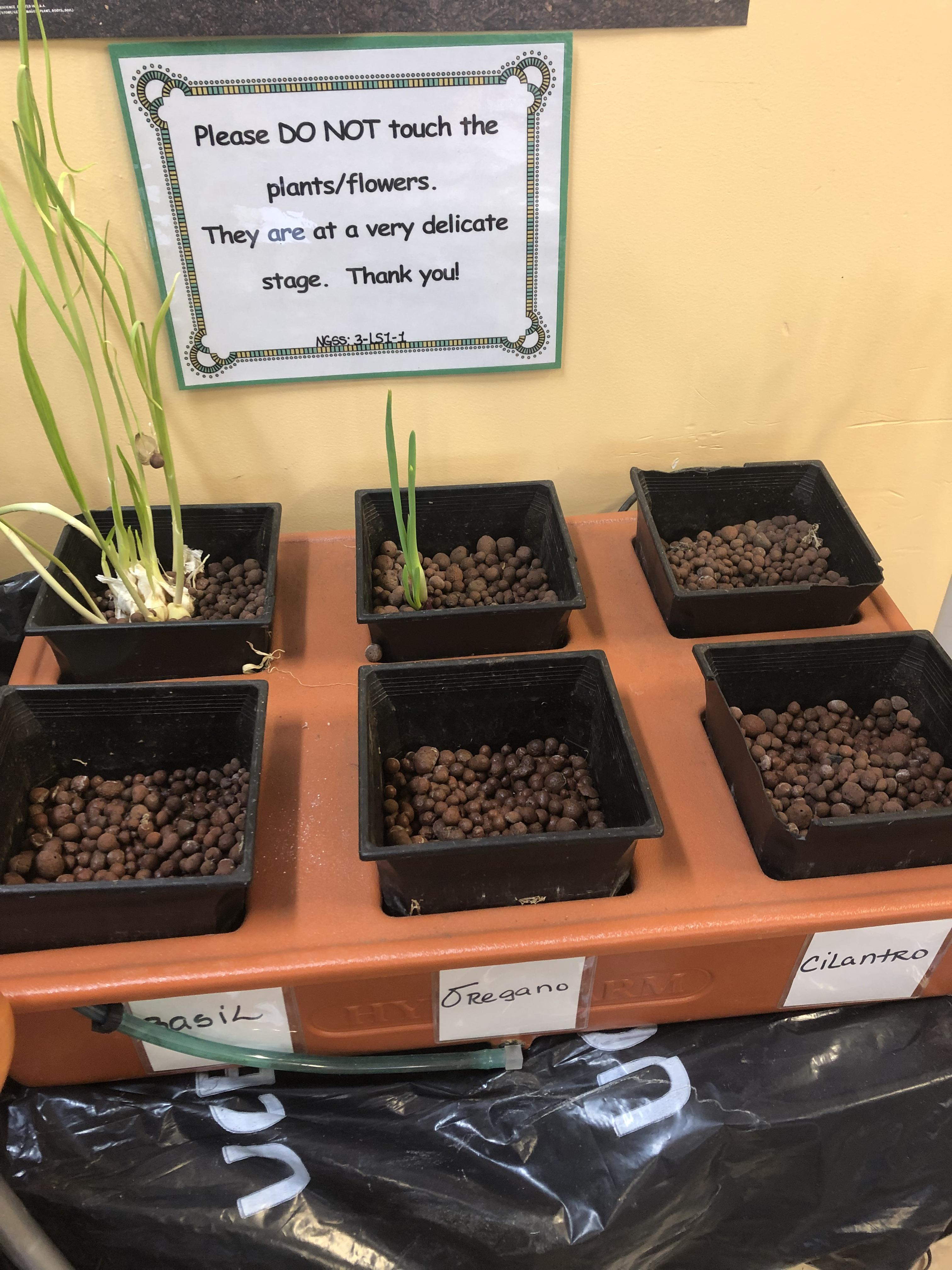 growing seeds experiment