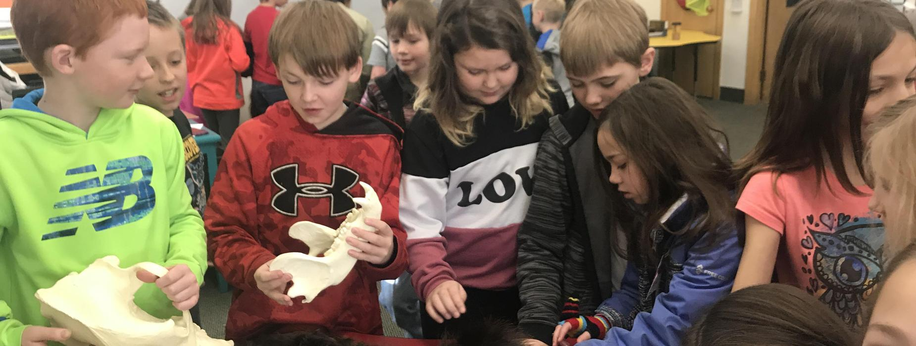 Students Learn About Animals