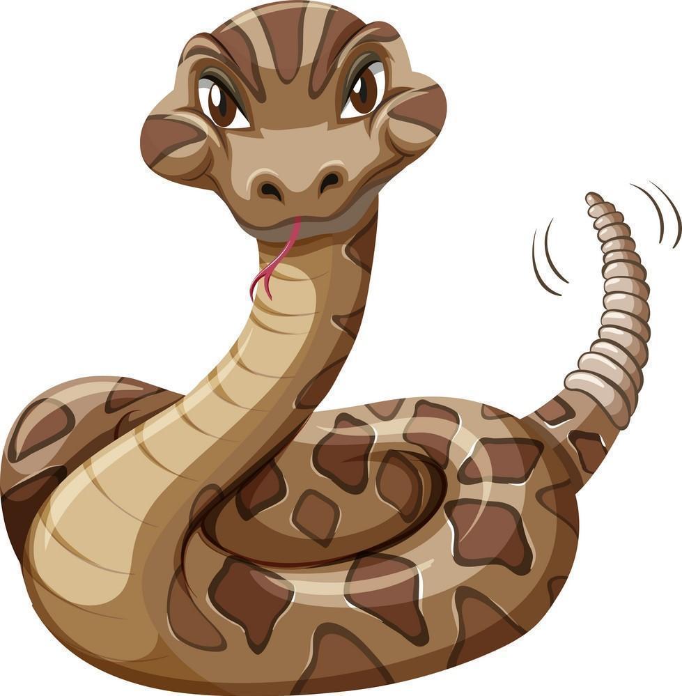 High School Snake Graphic