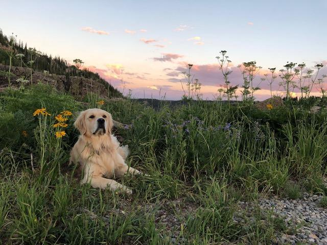Ripley taking it all in at the campground.