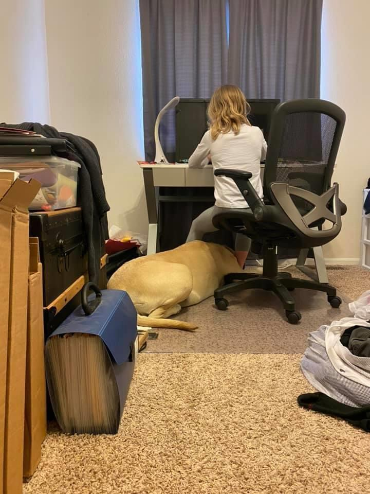 Student learns from home with dog