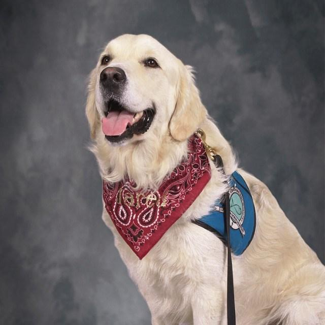 Jared The Comfort Dog's Profile Photo