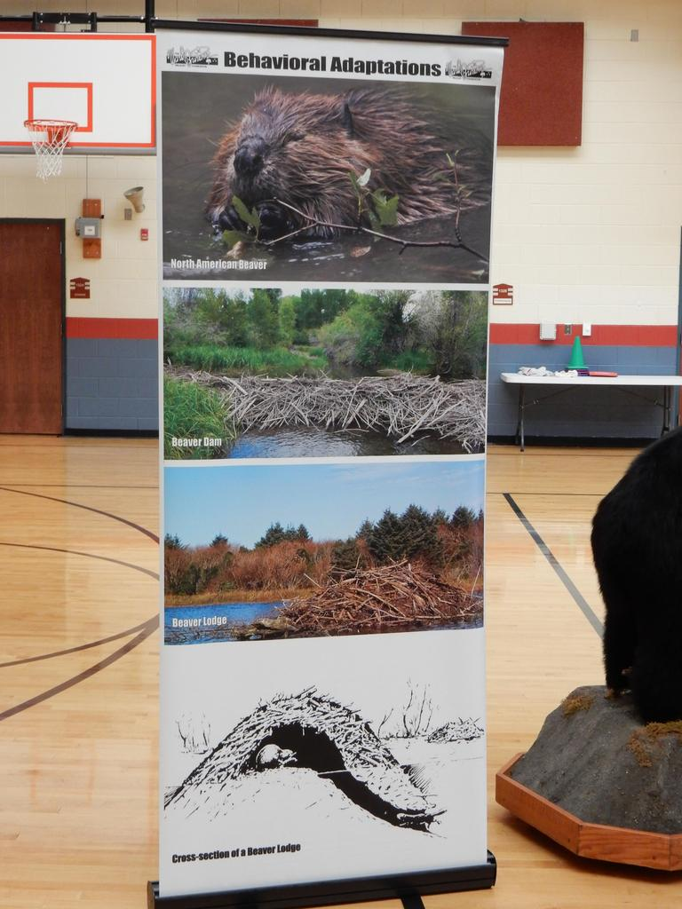 Image of poster showing animal adaptations and habitats