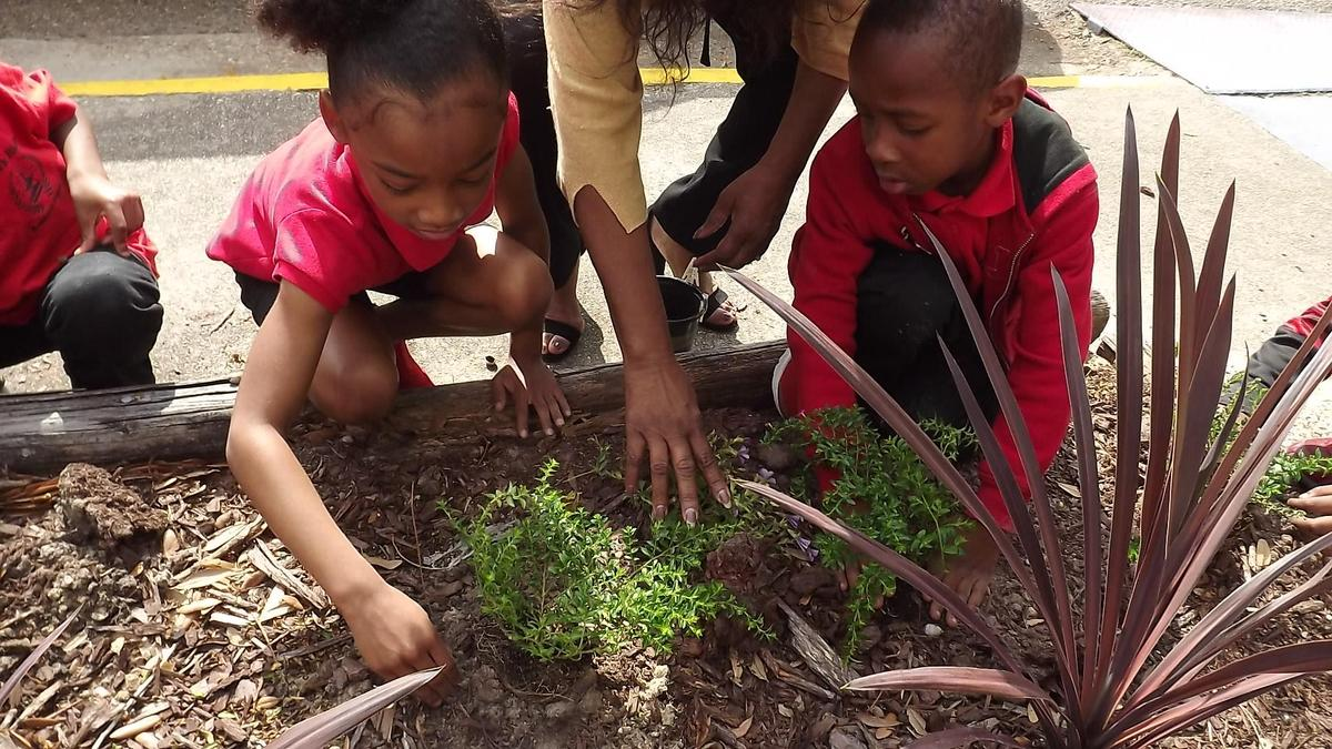 Kindergarten class planting flowers in flower bed