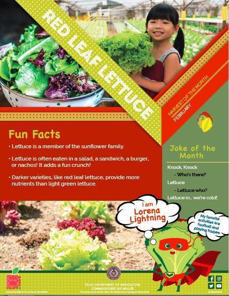 Monthly Harvest is Red Leaf Lettuce