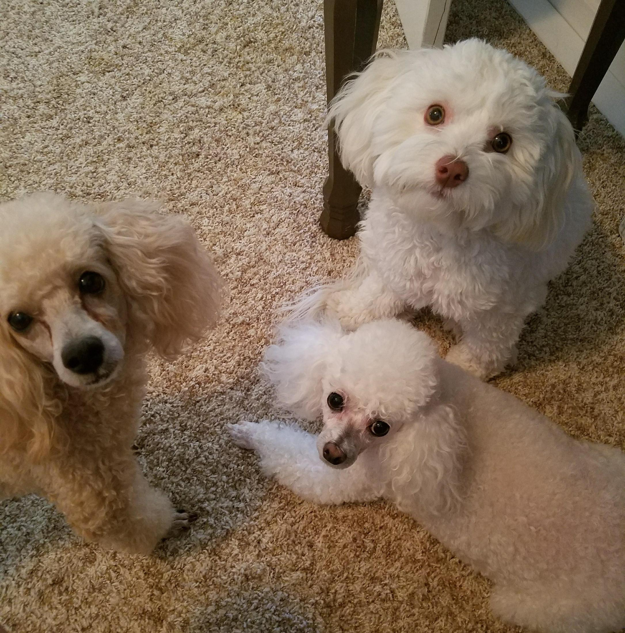 Charles, Khloe, and Lily...My doggies