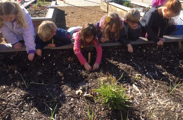 Students digging at the garden