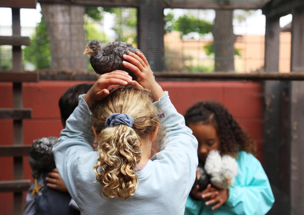 A person with curly blond hair in a ponytail stands with their back to the camera. They have a young chicken on their head and are supporting it with their hands.