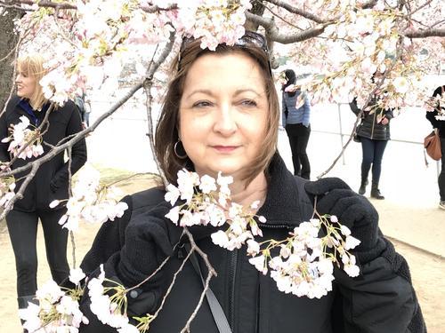Cherry Blossom Festival: Washington DC 2018